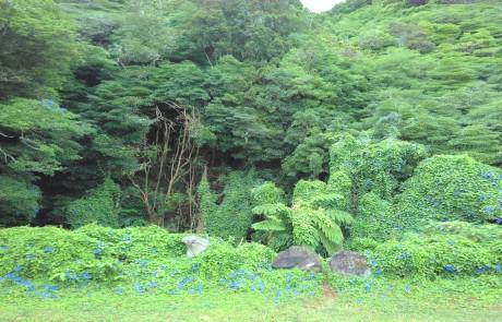 Wilder Dschungel auf der Azoren Insel Pico